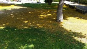 Guling och gräsplan i harmoni arkivfoto