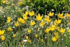 Guling- och gräsplanträdgård Royaltyfri Fotografi