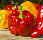 Guling och röd peppar Arkivbilder