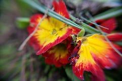 Guling och röda blommor arkivfoton