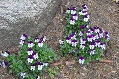 Guling och sm? blommor f?r malva bredvid Palacioen Quinta De La Reagaleira In Sintra Natur arkitektur, historia, gata royaltyfria foton