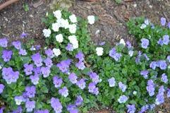 Guling och sm? blommor f?r malva bredvid Palacioen Quinta De La Reagaleira In Sintra Natur arkitektur, historia, gata fotografering för bildbyråer