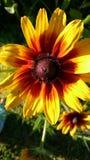Guling-röd blomma Fotografering för Bildbyråer