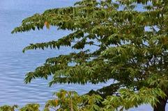 Guling-vädrad bulbul som vilar i ett träd arkivbilder