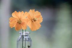 Gulingblommablom i exponeringsglas arkivfoton
