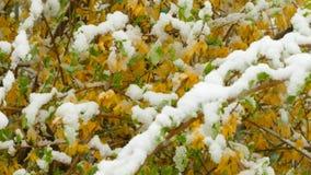 Gulingblommafrysning under snön stock video