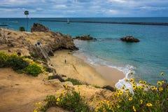 Gulingblommor och sikt av en strand i Corona del Mar Arkivbild