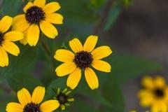 Gulingen blommar bakgrund Arkivbilder