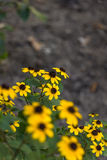 Gulingen blommar bakgrund Arkivbild