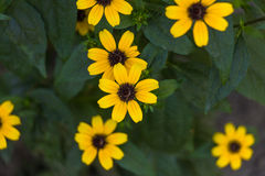 Gulingen blommar bakgrund Arkivfoto