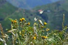 Gulingen blommar i bergen Arkivbild