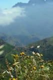 Gulingen blommar i bergen fotografering för bildbyråer