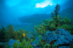 Gulingen blommar kick i de steniga bergen Arkivfoton