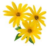 Gulingen blommar närbild Arkivfoto