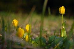 Gulingen fjädrar blommor royaltyfria bilder
