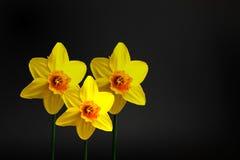 Gulingen fjädrar blommor Royaltyfri Foto