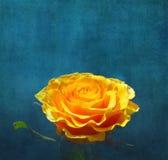 Gulingros på mörk turkosbakgrund Royaltyfria Bilder