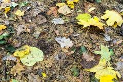 gulingsidor i stupade lärkvisare på jordning royaltyfri fotografi
