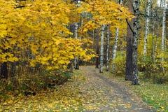 Gulingsidor på träden Fotografering för Bildbyråer