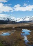 Gulkana glaciär Arkivfoto