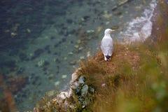 A gull at Étretat. Royalty Free Stock Photos