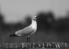 gull море стоковое фото rf