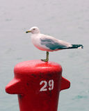 Gull. A gull takes a break on a colorful buoy Royalty Free Stock Photography