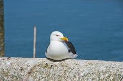 gull Royalty-vrije Stock Foto's