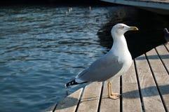 gull Stock Foto