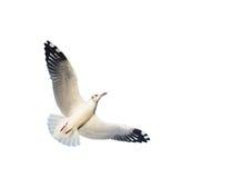 gull Fotografía de archivo