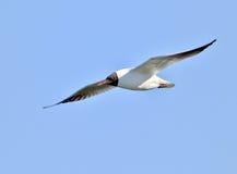gull Imagen de archivo libre de regalías