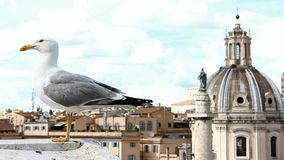 Gull above the historical center of Rome stock video