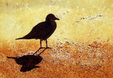 Gull on the beach Royalty Free Stock Photos