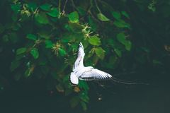 Gull bird fly over small river looking for food. Summer day Royalty Free Stock Photos