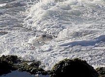 Gull  bird flying over coast waves Stock Photography