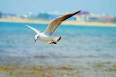 Gull. Birds  lake  gull  sea  Animals Stock Photography