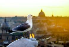 Gull contro lo sfondo di un tramonto sopra la parte storica di Roma fotografia stock libera da diritti