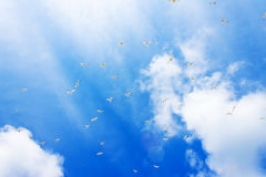 Gull Cormorant nei precedenti soleggiati blu del cielo immagini stock libere da diritti