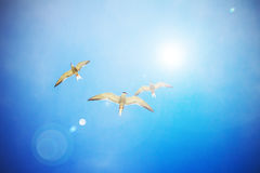 Gull Cormorant nei precedenti soleggiati blu del cielo immagini stock