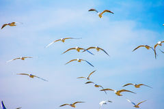 Gull Cormorant nei precedenti soleggiati blu del cielo fotografia stock libera da diritti