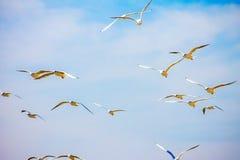 Gull Cormorant nei precedenti soleggiati blu del cielo fotografie stock