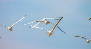 Gull Cormorant nei precedenti soleggiati blu del cielo immagine stock