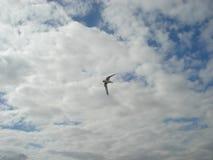 Gull en el cielo contra un fondo de nubes Fotografía de archivo libre de regalías