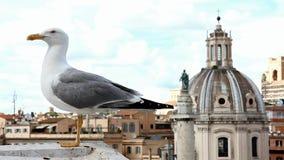 Gull en el puesto de observación sobre el centro de Roma almacen de metraje de vídeo