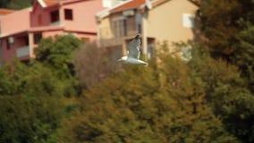 Gull en la bahía de Boka, Montenegro, Adriático en septiembre de 2016 almacen de metraje de vídeo