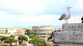 Gull en la perspectiva sobre el centro histórico de Roma almacen de metraje de vídeo