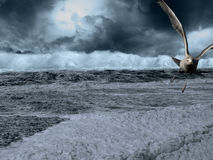 Gull escaping storm over sea. Closeup of flying seagull escaping large wave in stormy sea stock photos