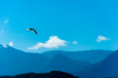 Gull flying on a very blue sky. Landscape with a seagull flying in a blue sky with some white clouds over the mountains stock images