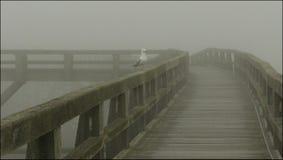 Gull in the fog Stock Photos