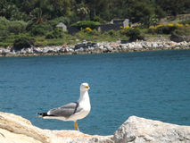 Gull in the foreground Royalty Free Stock Photo